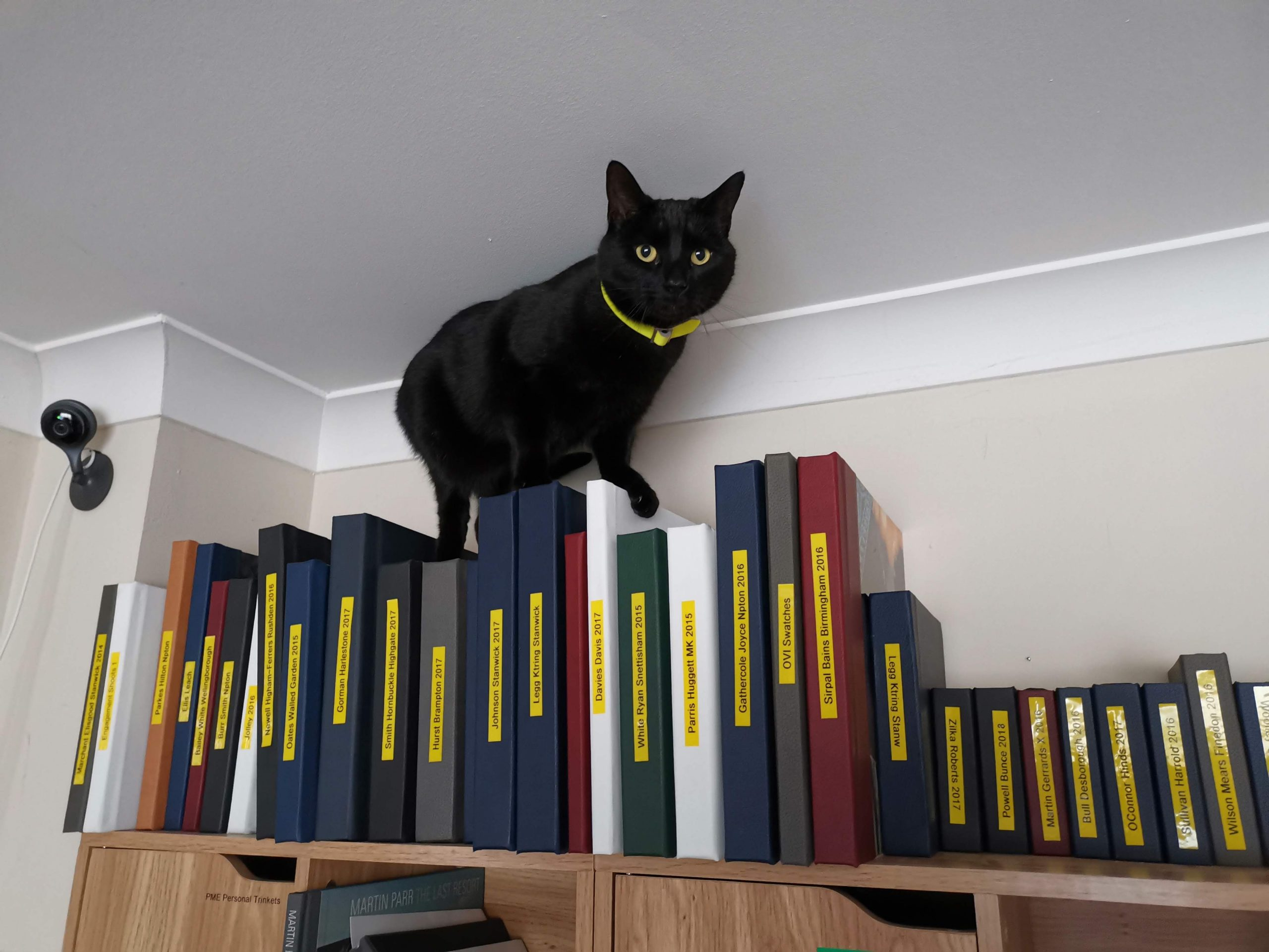 YFFUK Phil Endicott Useful things my cat tock climbing and sleeping on wedding albums